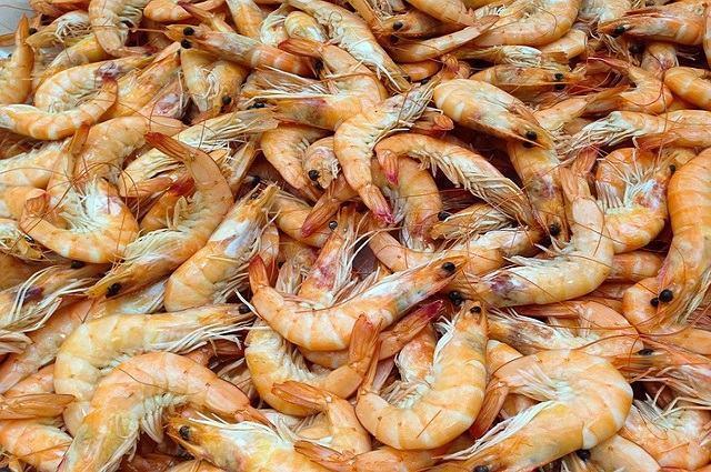 Conheça os alimentos mais perigosos do mundo