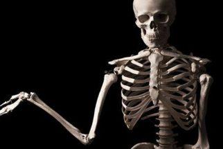 Descubra: você sabe qual o maior osso do corpo humano?