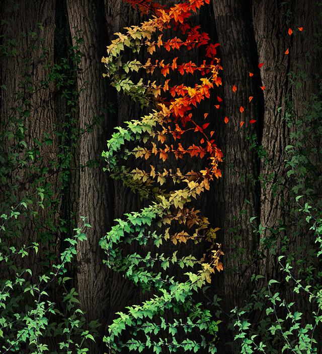 Imagem do DNA