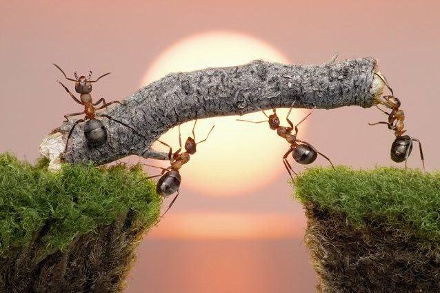 As características do sono das formigas que você não sabia