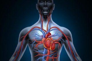 Assuntos sobre fisiologia humana que caem no Enem
