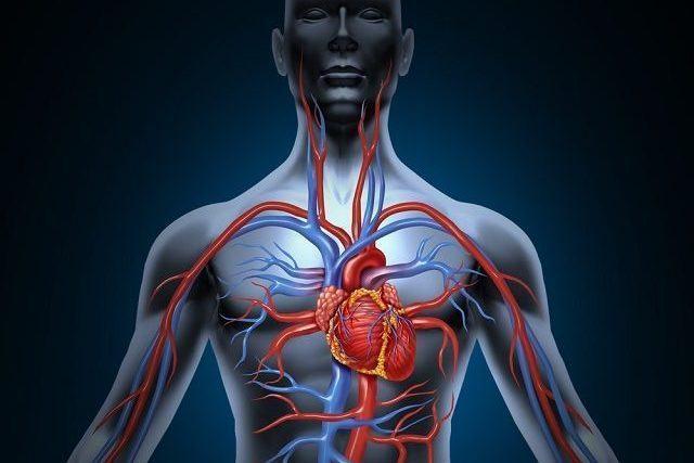 Assuntos sobre fisiologia humana que caem no Enem - Estudo Prático