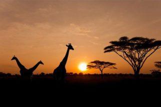 Assuntos sobre a história da África que podem cair no Enem