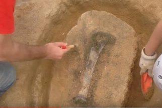Cientistas descobrem dinossauro na região Nordeste