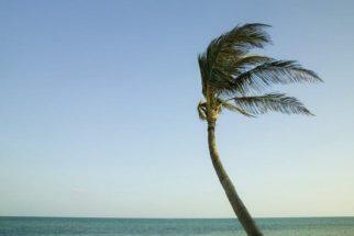 Descubra o que é o vento e como ele se desloca na atmosfera