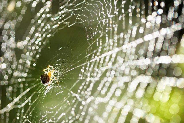 Fios de teia de aranha podem ser tão resistentes quanto aço