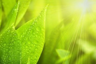 Questões sobre fotossíntese que podem cair no Enem
