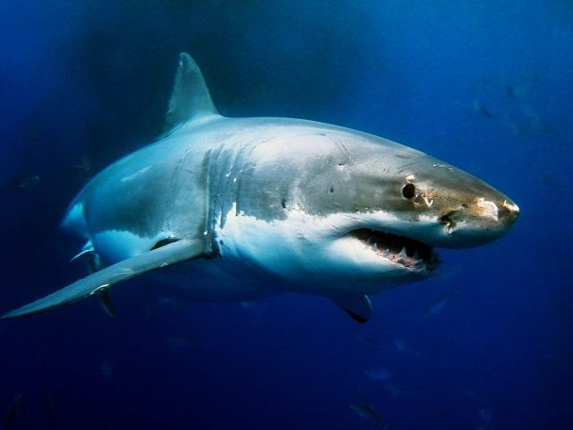 know-how-and-called-a-shark-female