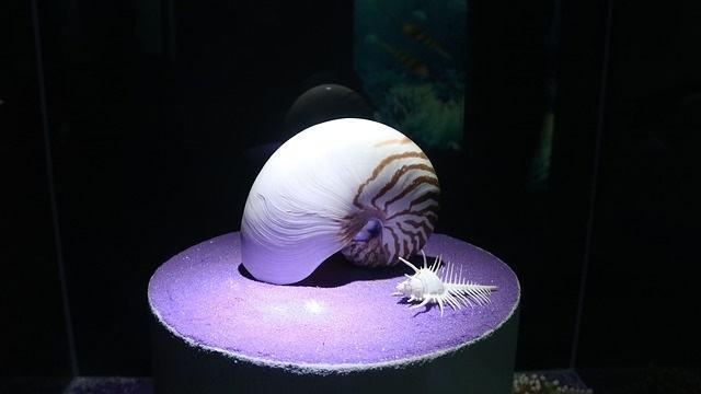animais-que-ha-milhares-de-anos-ja-existiam-no-globo-terrestre-2