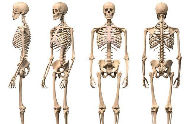 Jeito fácil: como aprender os nomes dos ossos do corpo humano ...