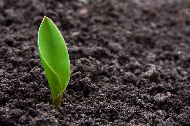 Questões sobre a origem da vida que podem cair no Enem