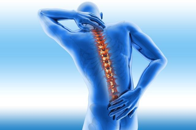 Saiba quantas vértebras tem o corpo humano