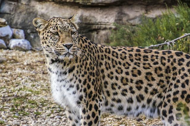 ate-2020-67-dos-animais-selvagens-vao-estar-extintos-do-planeta-3