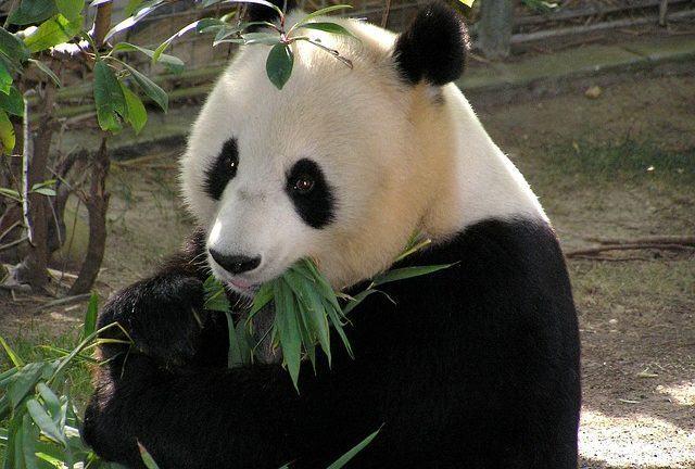Famosos Até 2020, 67% dos animais selvagens vão estar extintos do planeta  BQ41