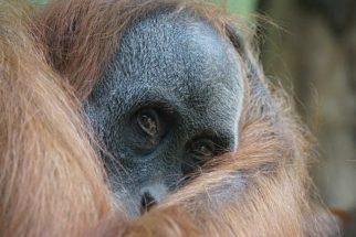 Até 2020, 67% dos animais selvagens vão estar extintos do planeta