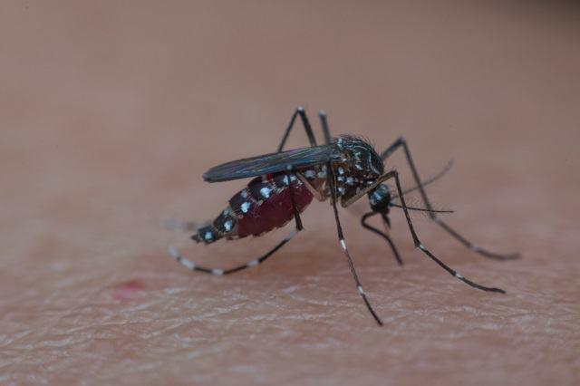 Mate o mosquito transmissor da zika com água sanitária