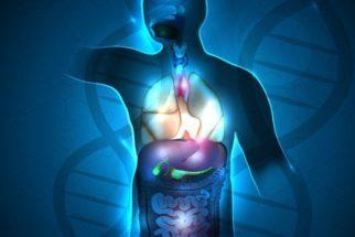 Coisas comuns que o corpo humano realiza naturalmente todos os dias