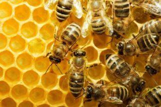 Abelhas: vida, tipos e curiosidades sobre esse inseto