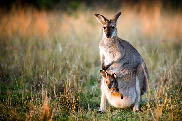 Kangaroo mom with baby in baby carrier