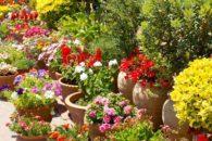 Já ouviu falar que as plantas veem, ouvem e cheiram? Entenda