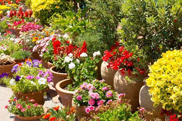 Já ouviu falar que as plantas vêem, ouvem e cheiram? Entenda