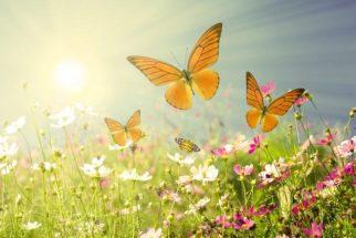 Primavera, a estação florida do ano. Conheça alguns jardins incríveis