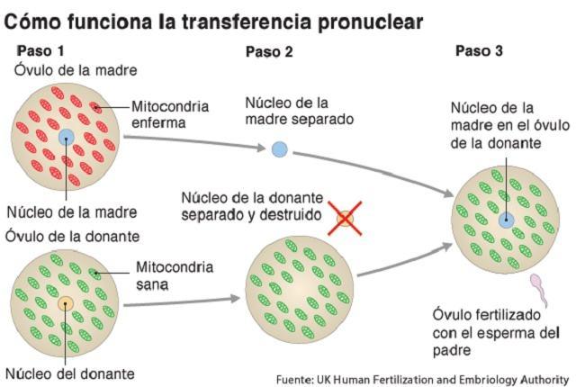 Nasce primeiro bebê a partir de um casal infértil com o DNA de três pais
