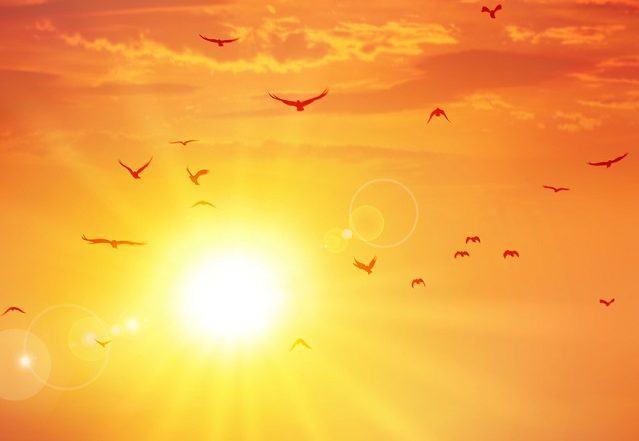 Verão, a estação mais quente do ano. Conheça as curiosidades
