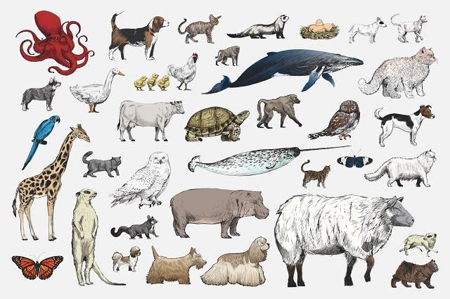 Desenhos de vários animais