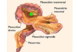 Descubra qual é o 'novo' órgão do corpo humano, onde fica e sua função