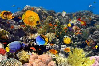 O que são peixes dipnoicos e o que os diferencia dos peixes normais?