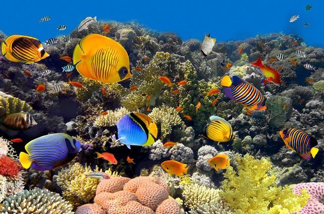sonhar com peixes