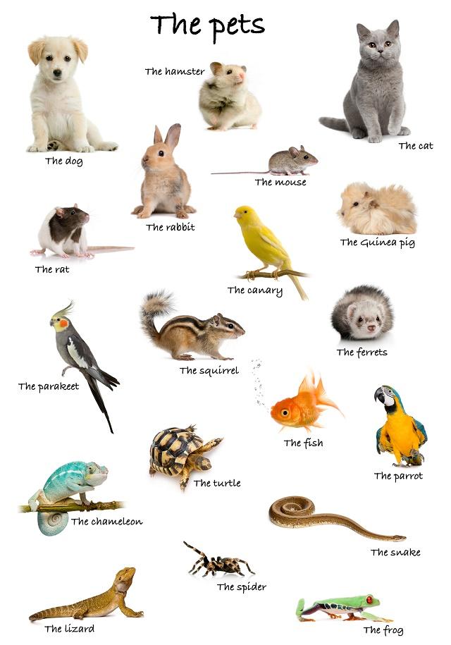 Vários animais domésticos