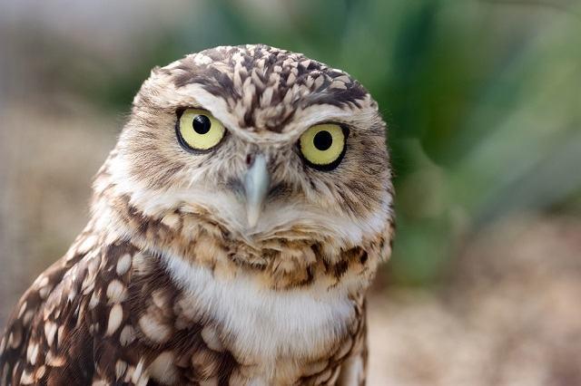 Por que alguns animais têm olhos na frente e outros têm nos lados?