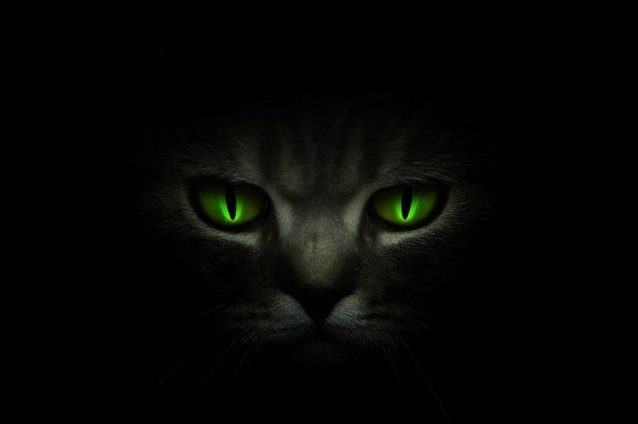 Why do the eyes of some animals shine in the dark?