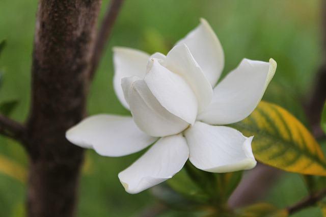 Conheça as flores mais cheirosas do Planeta Terra