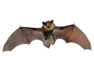 O que são animais hematófagos? Conheça suas particularidades