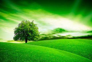 O significado da palavra 'green' quando não ser refere a uma cor