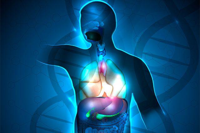 Descubra os nomes das partes do corpo humano em espanhol