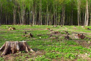 Videoaula: O que pode cair na prova do Enem sobre a degradação dos solos