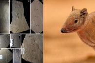 Brasileiro encontrou fóssil de mamífero que viveu há 140 milhões de anos