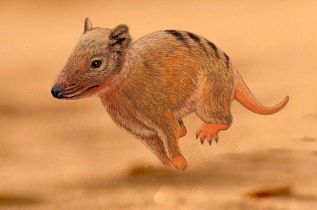 Fóssil de mamífero é encontrado e data 140 milhões de anos