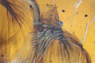 Cientistas encontram pássaro com mais de 66 milhões de anos preservado