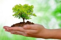 Como surgiu o dia mundial do meio ambiente