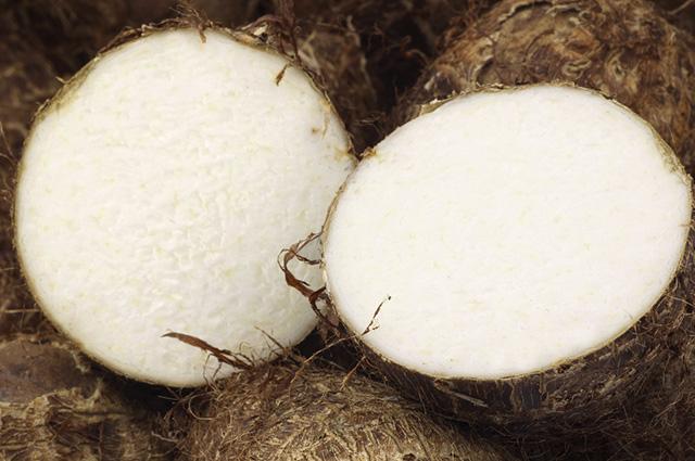 Tubérculo, rizoma e bulbo têm distinções