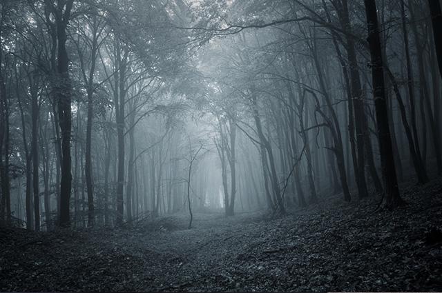 O local ganhou uma fama um tanto quanto assombrosa: Floresta das Crianças Desaparecidas