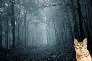 Onde fica a floresta conhecida como 'Floresta das Crianças Desaparecidas'