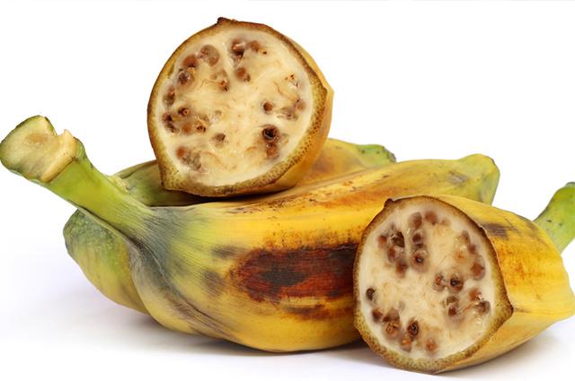 Essa espécie de banana nasce no sul da Ásia e é imprópria para consumo humano