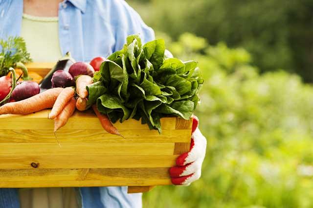 Frutas e verduras orgânicas não recebem adubos sintéticos e os animais os animais não recebem hormônios