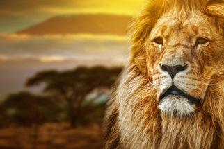 Por que o símbolo do imposto de renda é um leão?